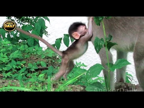 Baby Monkey Almost Fails Down to River....Angkor Daily 500