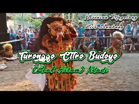 Kesenian Turonggo Citro Budoyo {Leak Hitam} Ndadi ~ Live Srumbung Magelang