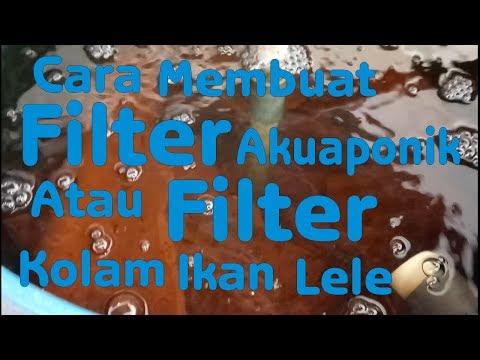 Cara membuat filter akuaponik atau filter kolam ikan lele