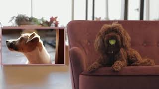 Cool 🤣 Funniest 🐩 Dogs & 🐈 Cats & Funny Pet & Animals Life 🐈🐩