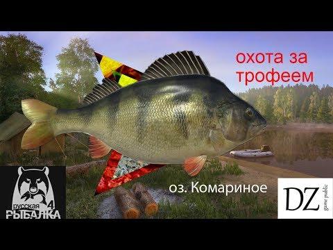 #Russian fishing 4#Трофейный окунь#Комариное