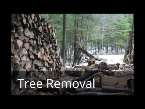 find-the-best-tree-service-in-virginia-beach,-va