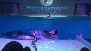 Шоу касаток Кругосветное путешествие в Москвариуме
