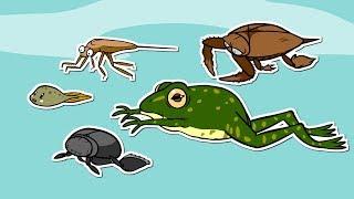연못 속의 작은 세상 | 연못에 사는 곤충과 생물들 | 연못 속의 생태계 | 곤충박사★지니키즈