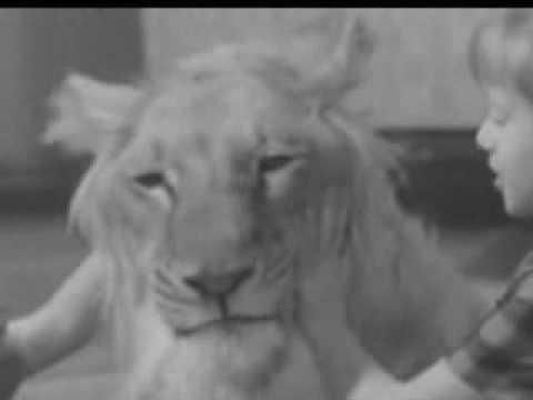 Семья Берберовых и лев Кинг 1972 г.