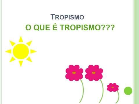 Tropismo - Experiência de Fototropismo