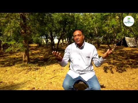Drumstick Cultivation & Farming | Moringa Tree Farming & Cultivation | AgriGurus of India- Story 13
