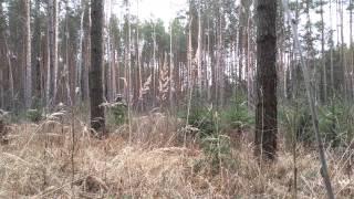 Тест multicam: весенний лес(, 2015-03-14T22:09:18.000Z)