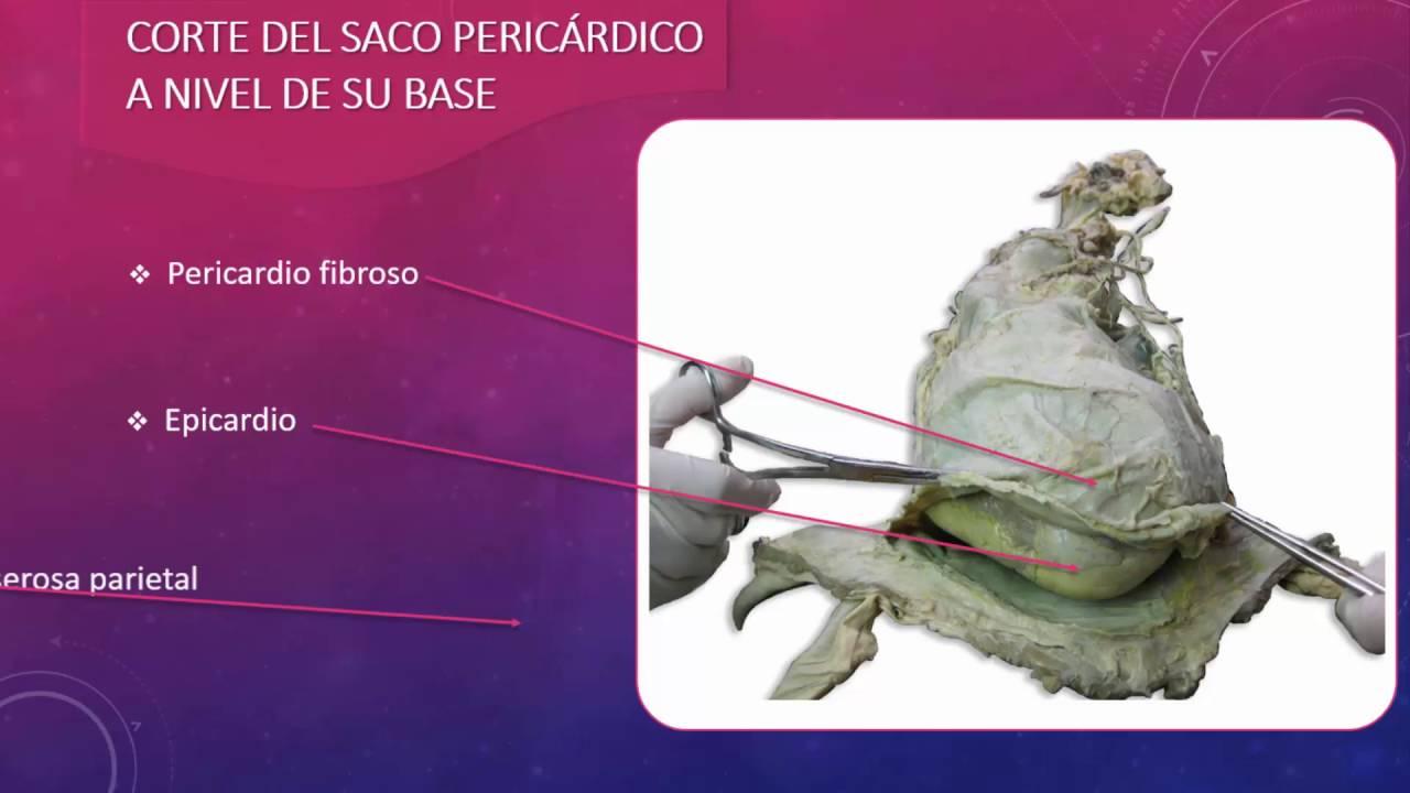 Saco pericárdico - YouTube