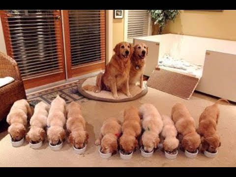 Cutest Puppies! Mother Dogs and Cute Puppies Videos Compilation, Cute moment of Puppy #2