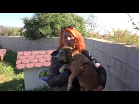 Sokak Hayvanlarına Sığınak