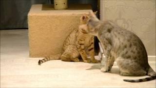 Дориан котенок оцикет.wmv