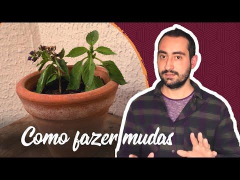 👉 CONHEÇA 10 VARIEDADES DE CIFRE DE VEADO EXTREMAMENTE EXÓTICOS 😘🌷из YouTube · Длительность: 4 мин33 с