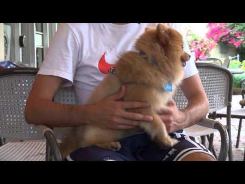 Dog Adoption Documentary