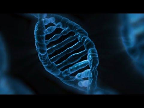 Publican la secuencia completa del genoma del trigo