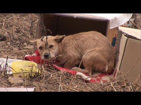 Stray Dog Can't Leave Her Puppy's Dead Body... | Kritter Klub