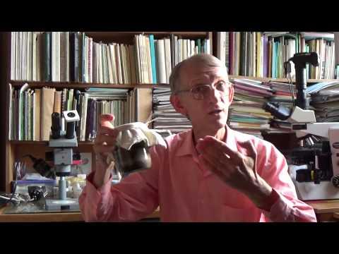 Лечит Чудо-Юдо Знахарь-Жук: Какие Методы Разведения?