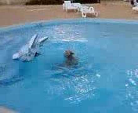 swimming with a dolphin in a swimming pool - YouTube