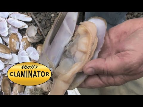 How to clean razor clams with a knife...fast!