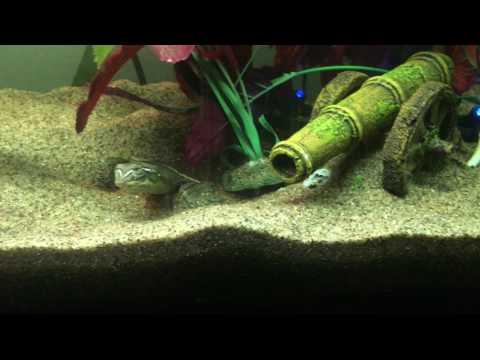 Turtles Sleep Underwater