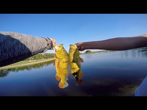 EXTREME Topwater Fishing for MASSIVE BASS on the most EXPENSIVE Golf course in Miami!!!