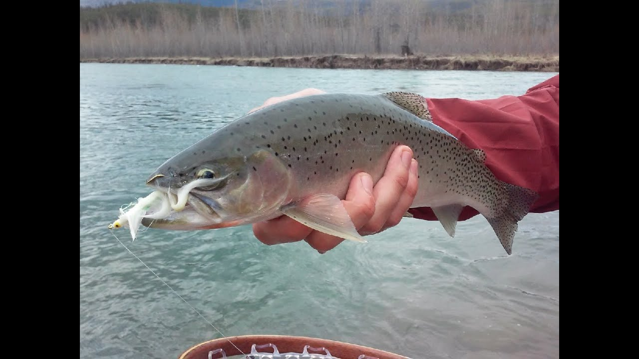 Spring trout fishing middle fork flathead river youtube for Michigan one day fishing license