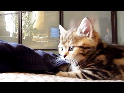 Pikachu Kitten and pants
