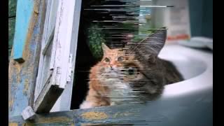 Обычные кошки. Красивые домашние беспородные...