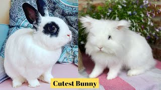 Cutest Bunny in The world 🌎 | Supper funniest pets | Animal Planet Ever #18