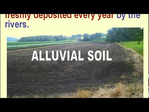 SOILS OF INDIA Part 2   ALLUVIAL SOIL