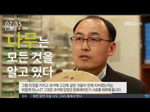 [MBC 충북 NEWS] 나무가 숨긴 비밀을 캔다.