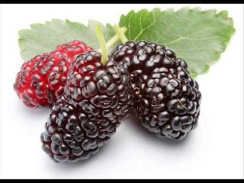 what does Blackberry dreams mean? #dreammeaning