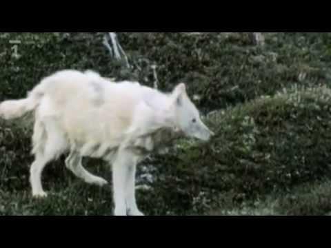 Na Kus Řeči Se Zvířaty-Vlk