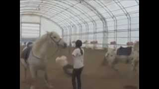 Лошади приколы. Подборка 1.