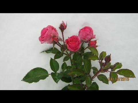 Комнатные цветы с фото и названиями, домашние растения и