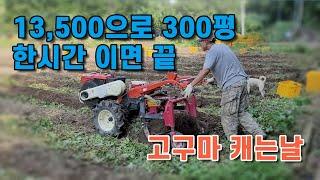 13,500원 으로 한시간안에 300평 고구마밭 기초 …