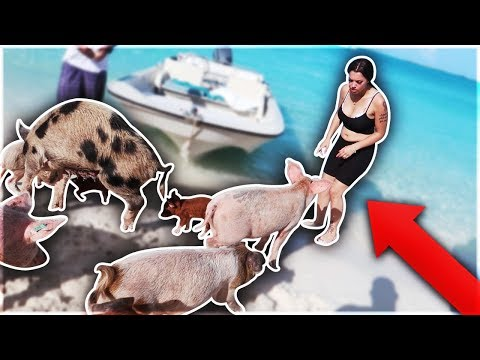 SWIMMING WITH PIGS IN THE BAHAMAS 🐷