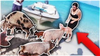 Download SWIMMING WITH PIGS IN THE BAHAMAS 🐷 Mp3 and Videos