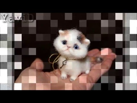Кошки и котята персидской породы. На доске объявлений olx казахстан легко и быстро можно купить котенка породы персидская. Заведи друга прямо сейчас!