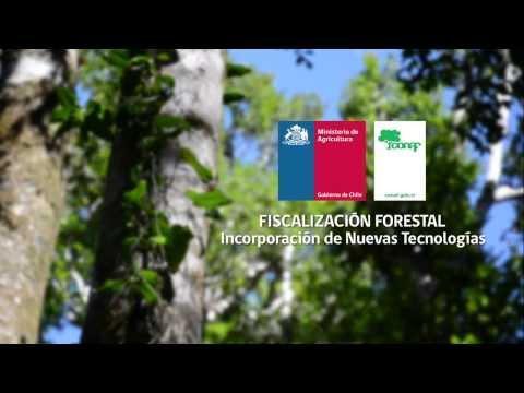 Fiscalización forestal de CONAF