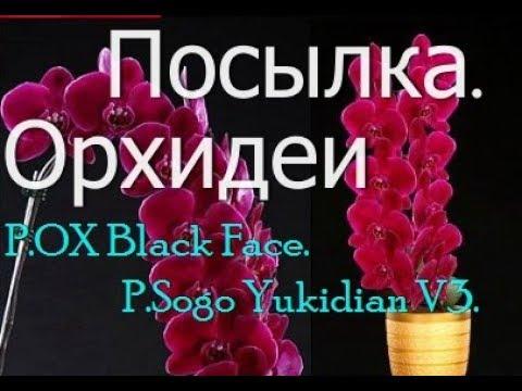 🍀Зеленая Орхидея. Красота!🍀 - YouTube
