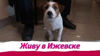 День защиты животных в Ижевске