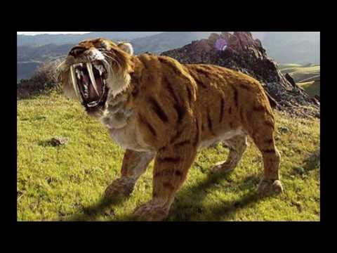 The Amazing Animals Fact : ANIMALS, BIODIVERSITY & LIFE