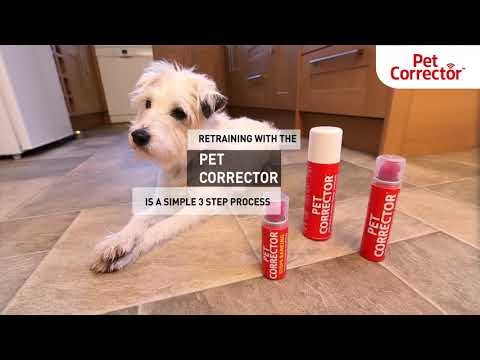 train-your-dog-with-pet-corrector-|-dog-training-tips