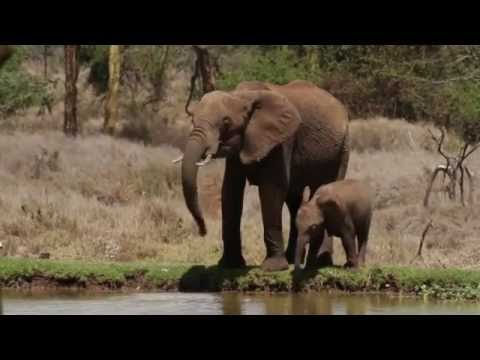 A film by The Royal Foundation on Conservation for the #Endwildlifecrime conference