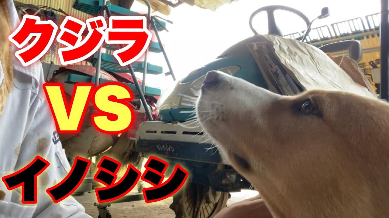 【獣害対策】イノシシには電気柵が有効?