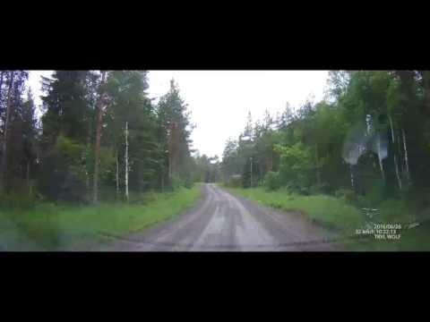 Driving in Glaskogen, a nature reserve in Sweden (Dashcam)