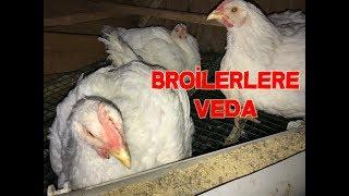 Broilerlere Veda