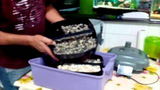 Filtros Cânister/Desmontagem - Vídeo 02(Fazendo manutenção num filtro canister Se gostou dê um joinha ae pra dar aquela força, compartilha no seu facebook e se INSCREVA no meu canal: ..., 2014-07-06T21:12:45.000Z)