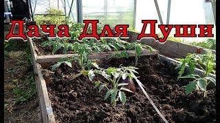 """10 """"НЕЛЬЗЯ"""" при выращивании ТОМАТОВ"""